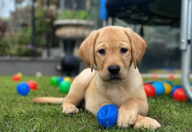Arya il nuovo cucciolo di casa De Rossi -Felberbaum (Foto Instagram)