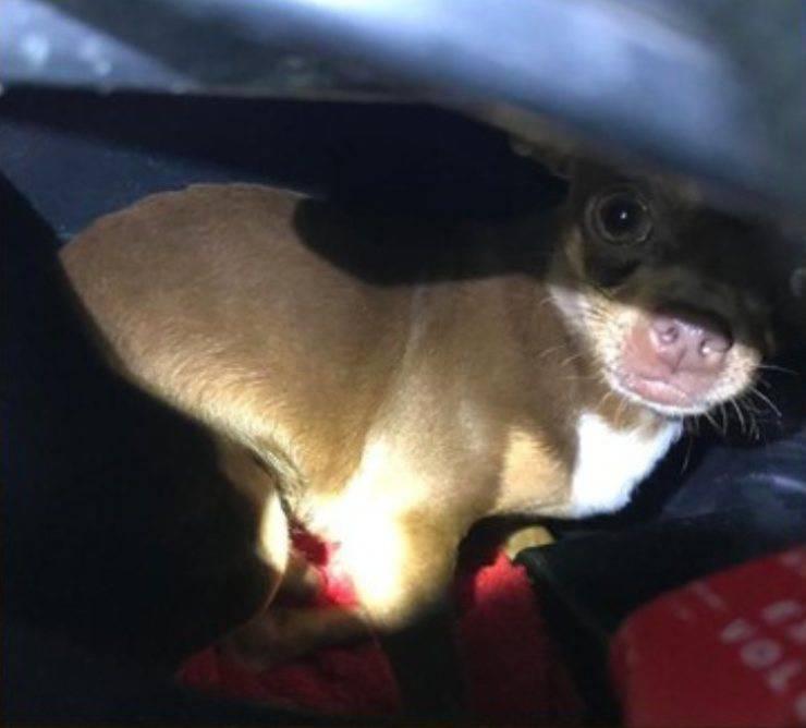 cane chiuso sottosella motorino