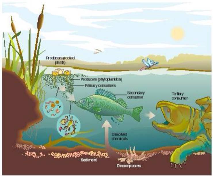 esempio di catena alimentare del mare