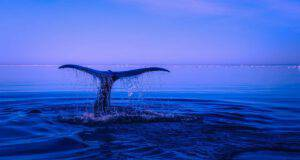 pesci animali oceani