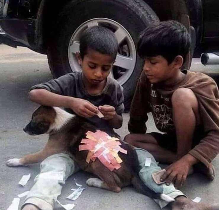 bambini cerotti cane ferito