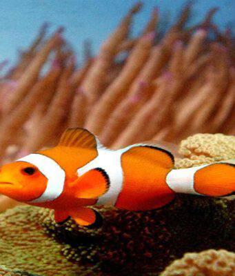 Salmonella negli acquari