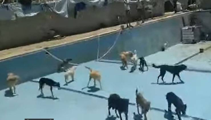 Campagna Salva Un Randagio Animali Vittime Guerra