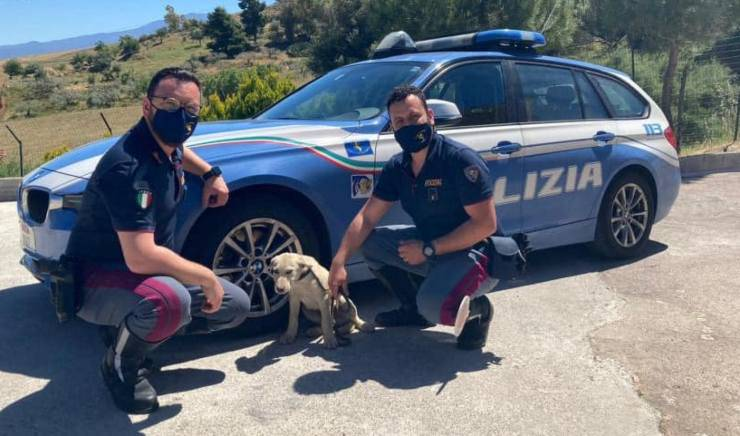 Cucciolo Cane Salvato Polstrada