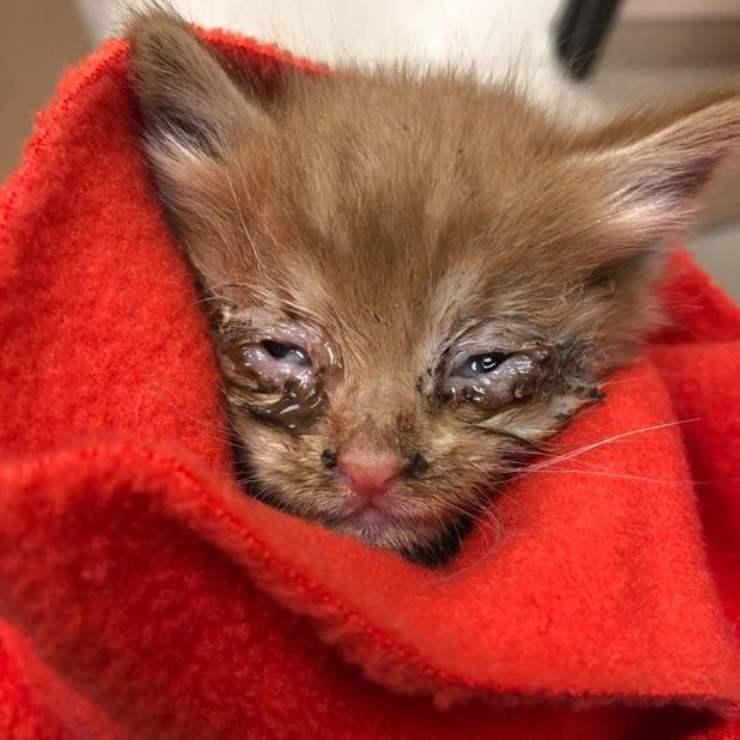 Gatto Intercapedine Arizona Salvato