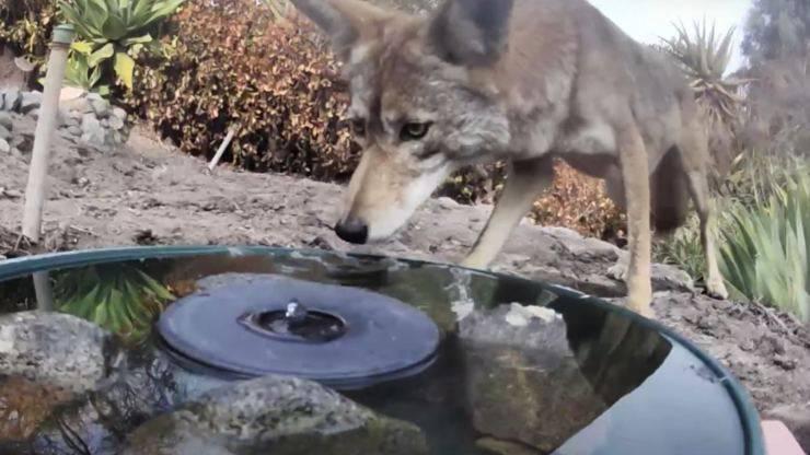 Telecamera Nascosta Fontana Animali