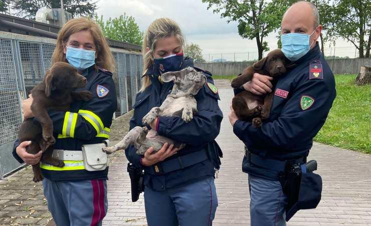 36 Cani Furgone Polizia