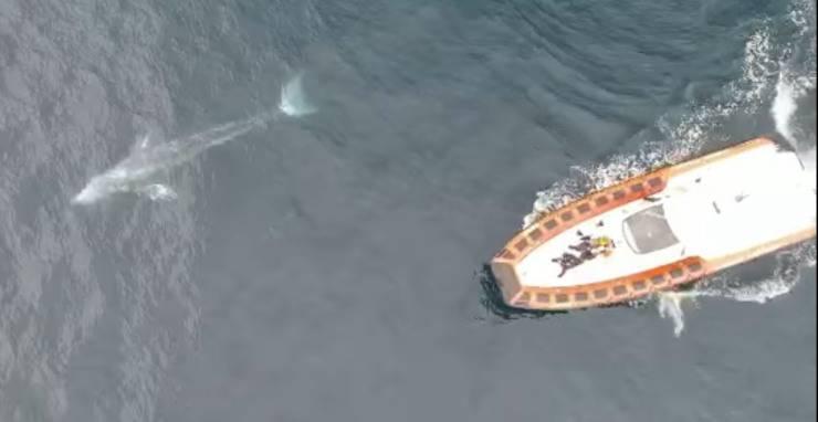 Balena Wally Video