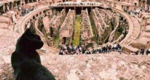 Morta Nerina Gatta Colosseo