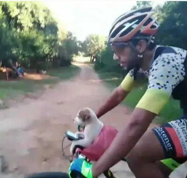 Cucciolo Cane Sacchetto Salvato Ciclista