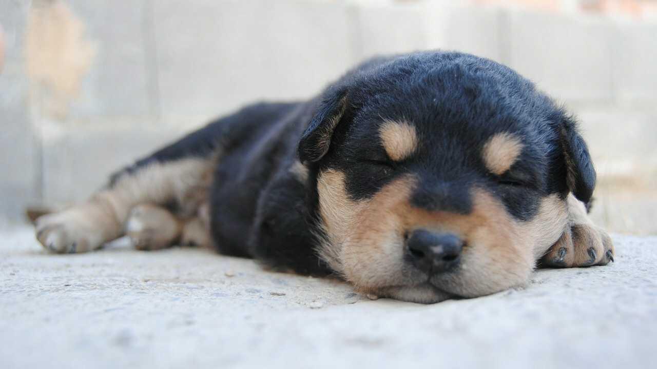 abitudini del cane mentre dorme