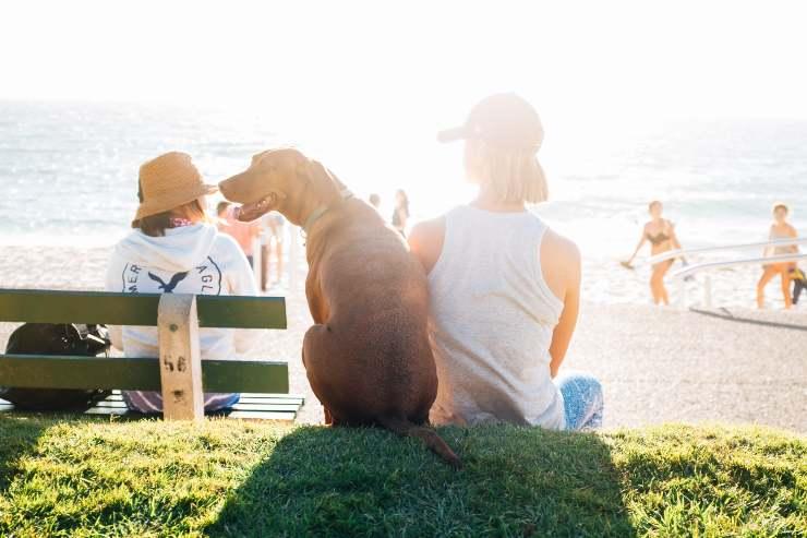Razze di cani socievoli con gli estranei