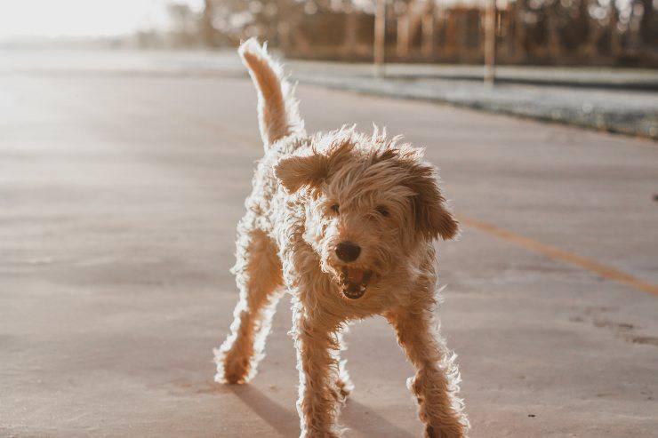 Il cane e la malattia comportamentale