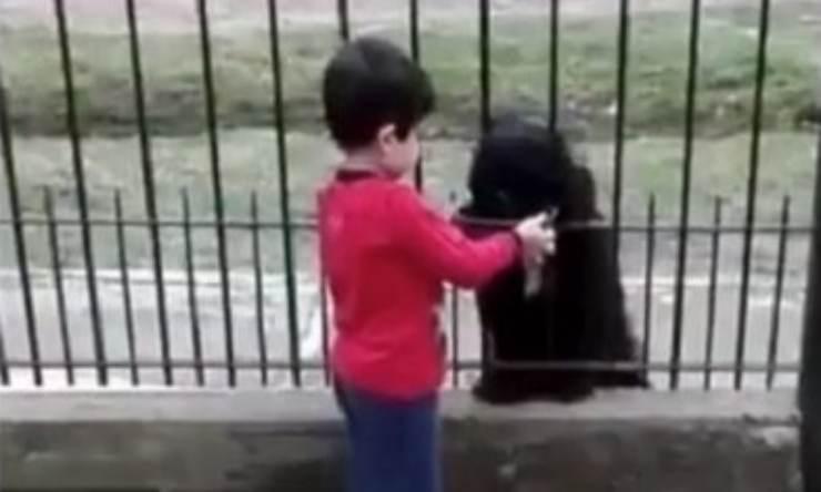 Bambino offre cibo al cane (Foto video)