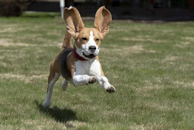Cane corre nella natura