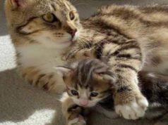 Calliope con il figlio (Foto Instagram)