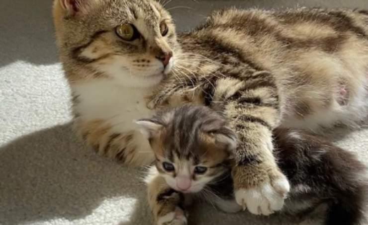 Calliope e il micino (Foto Instagram)