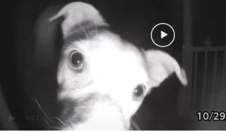 Il cane suona il campanello (Foto video)