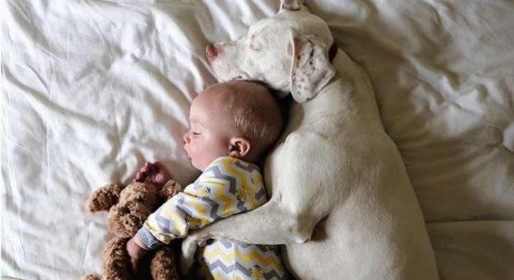 Cane dorme con il bimbo Facebook