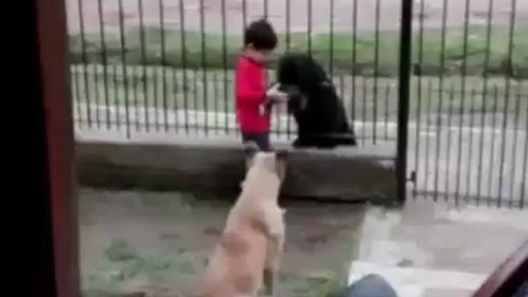 Tanta dolcezza e generosità (Foto video)