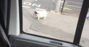 la fotografia scattata dall'uomo che pensava che il cane fosse molto buffo (Foto Facebook)