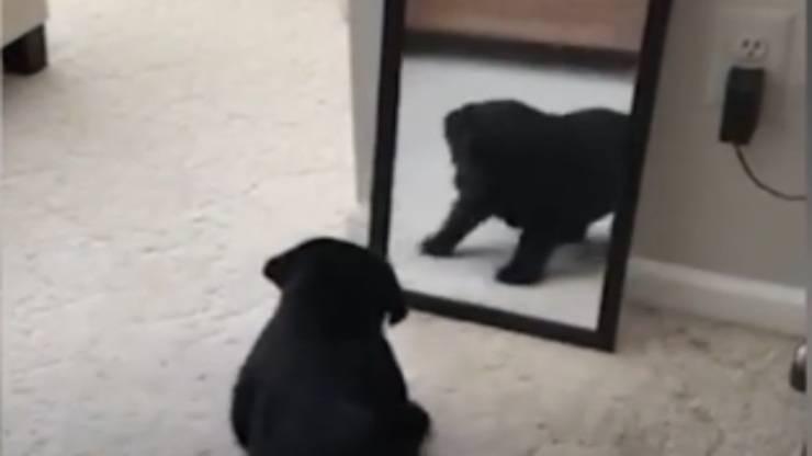 La sorpresa del cane (Foto video)