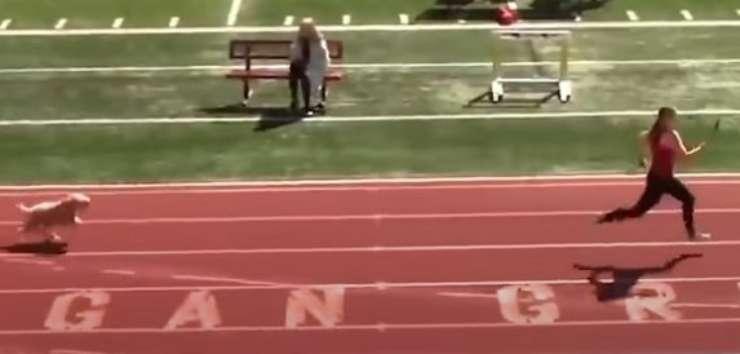 Cane in sfida (foto video)