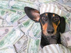 cani più ricchi mondo