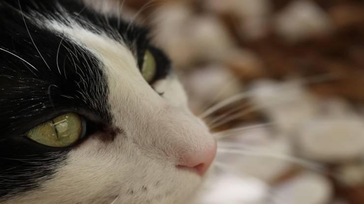 Il gatto non ci guarda mai