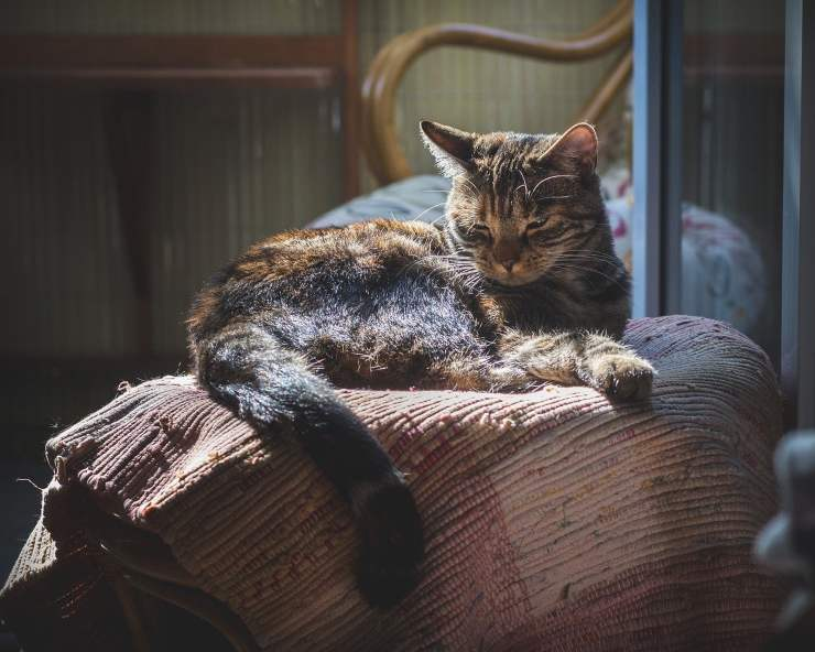 Il gatto anziano si isola