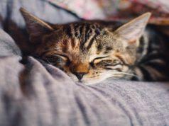 Avvelenamento nel gatto
