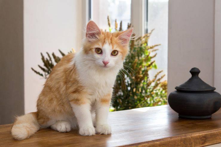 Il gatto non usa il tiragraffi in casa