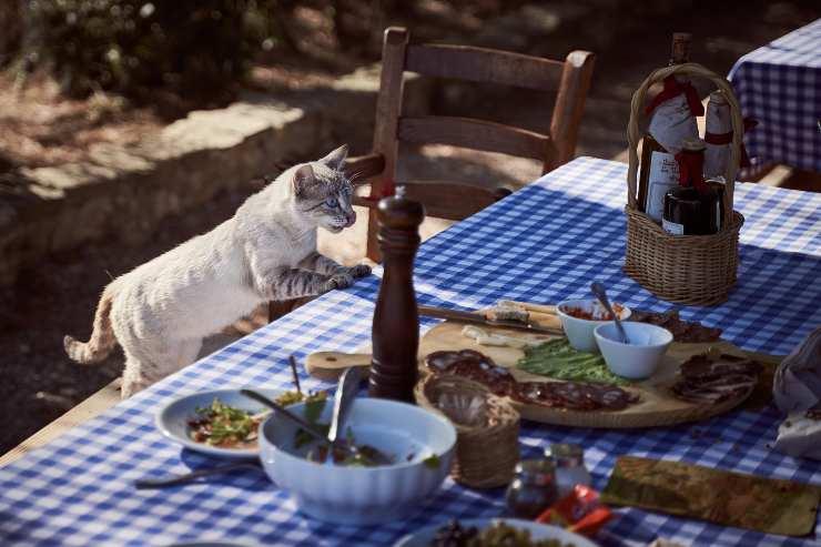 Il gatto siede a tavola