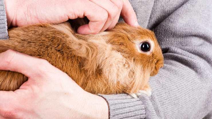 come accarezzare coniglio