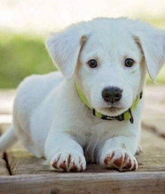 come insegnare al cane a sdraiarsi