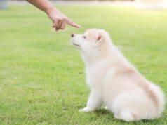 come insegnare al cane comando no