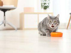 insegnare gatto a non ringhiare quando mangia
