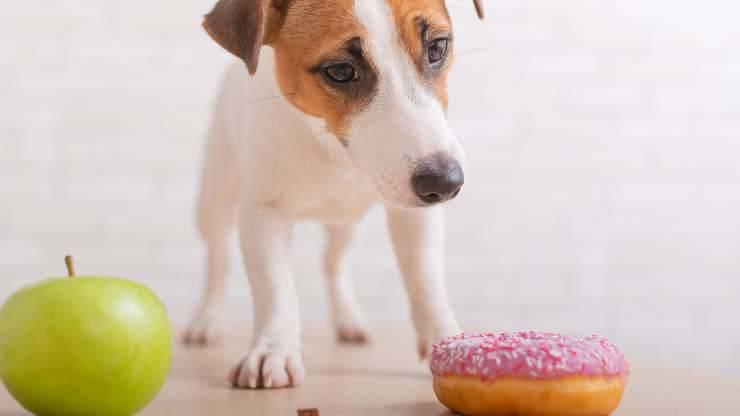 come prevenire diabete cane
