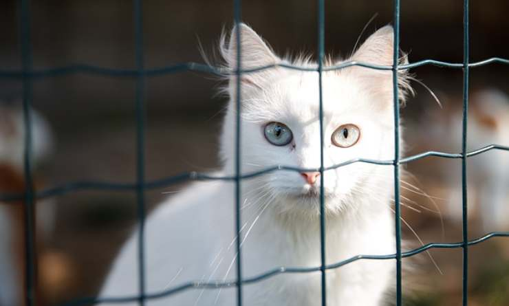 come scegliamo il gatto da adottare