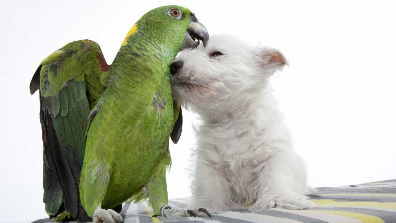 convivenza cane pappagallo