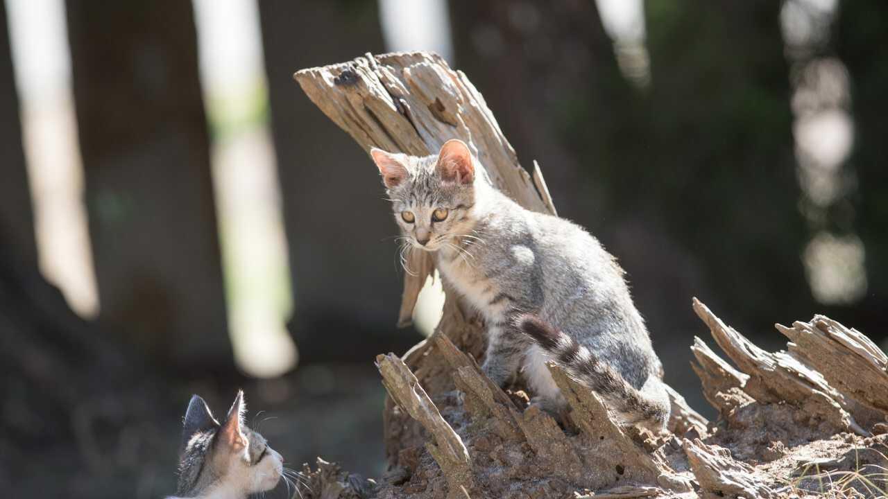convivenza gatto iguana