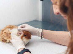 criceto dal veterinario