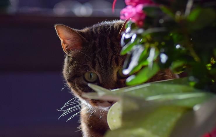 gatto curiosità