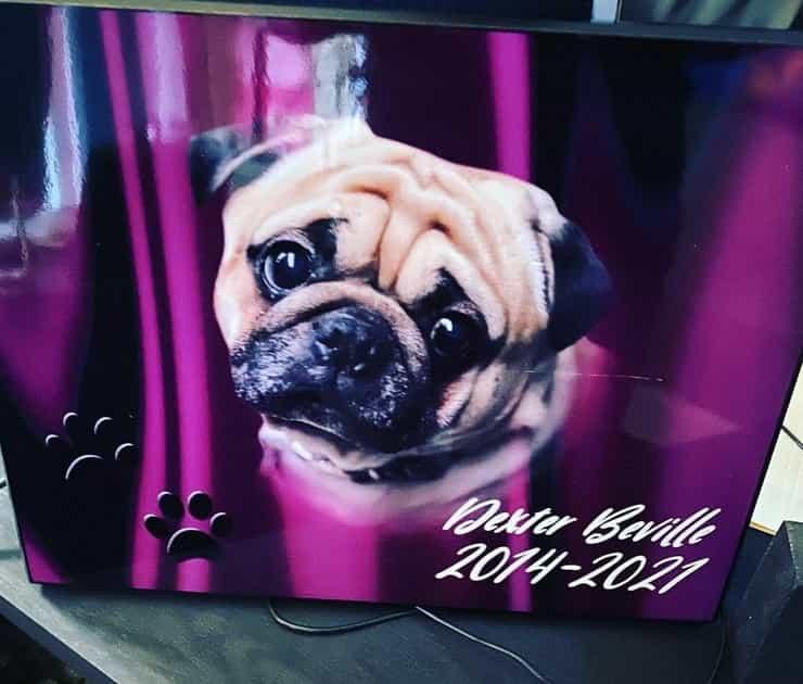 Dexter il carlino per il quale il suo proprietario ha organizzato un funerale sontuoso per la sua dipartita (Foto Instagram)