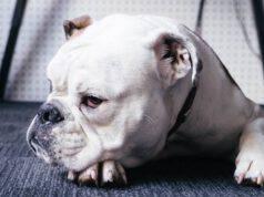 cane in primo piano (Foto Pixabay)
