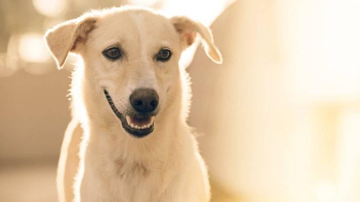 cane curioso (Foto Pixabay)