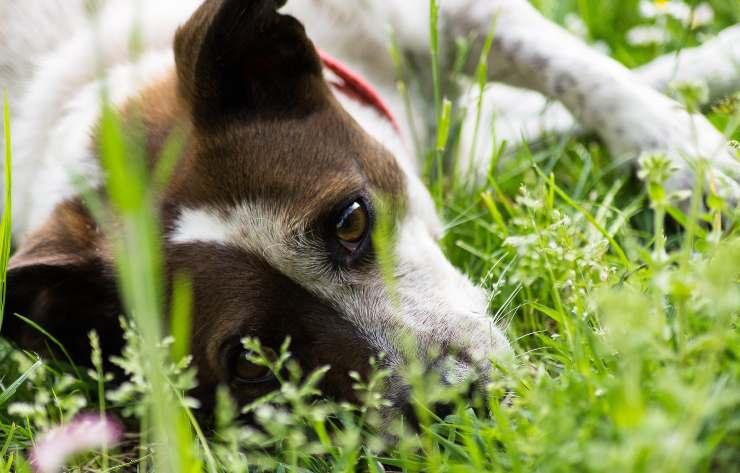 Come avvicinare il cane spaventato
