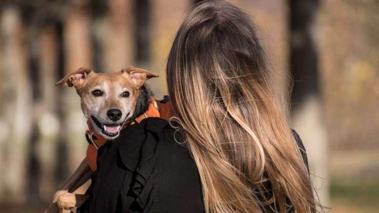 Tanto amore per il cane (Foto pixabay)