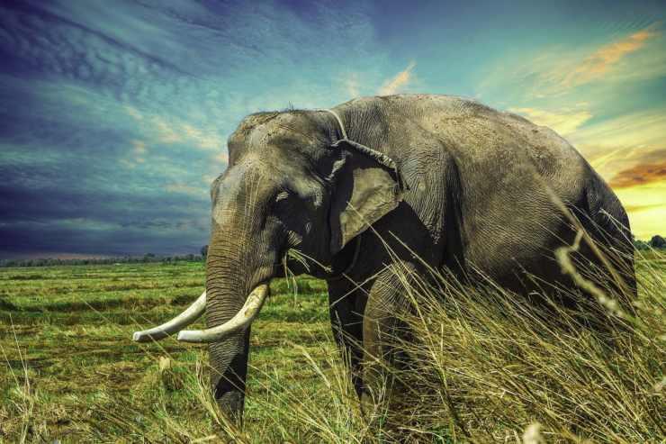 Animali che sudano