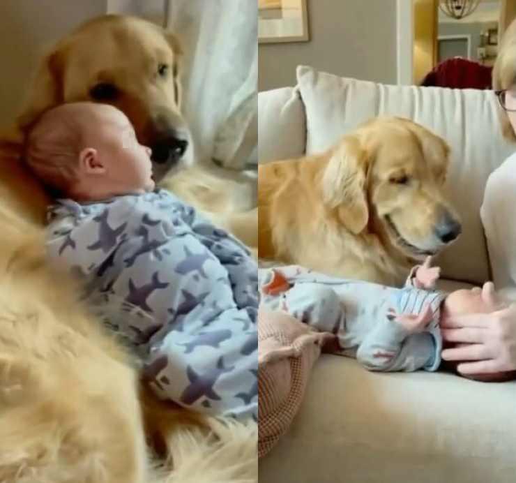 allontanano bambino cane